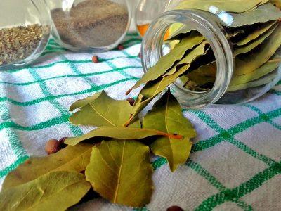 Przyprawy i Zioła w kuchni - liście laurowe