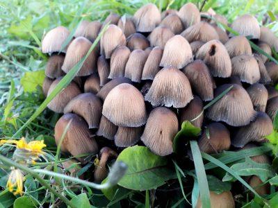 grzyby grzybobranie