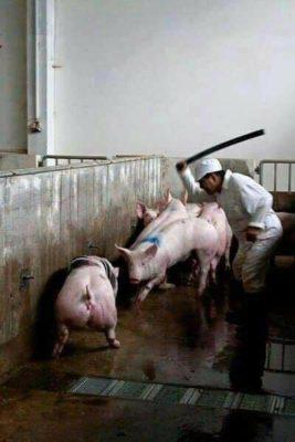 znęcanie się nad zwierzętami